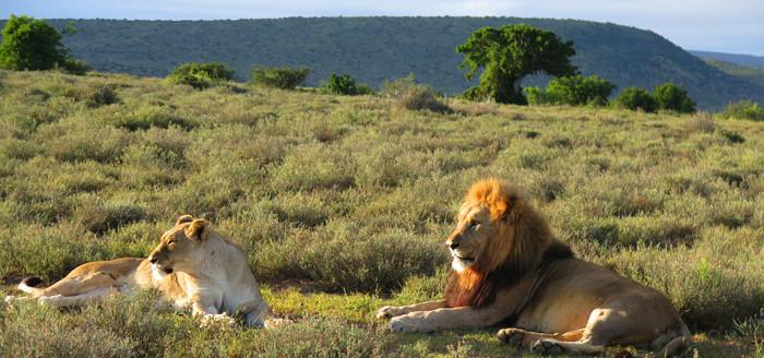 2739_safari