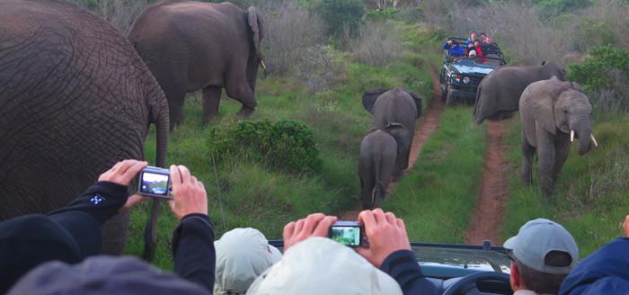 334_safari